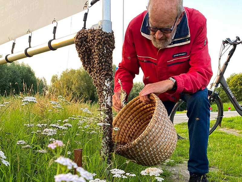 Bijenzwerm bevrijd van spandoekframe in Máximapark